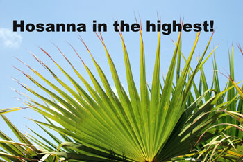 Palms for Palm Sunday